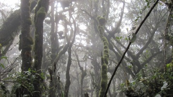 Back into the rainforest