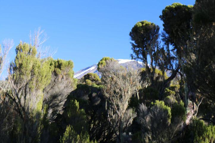 Mount Kilimanjaro Milennium Camp